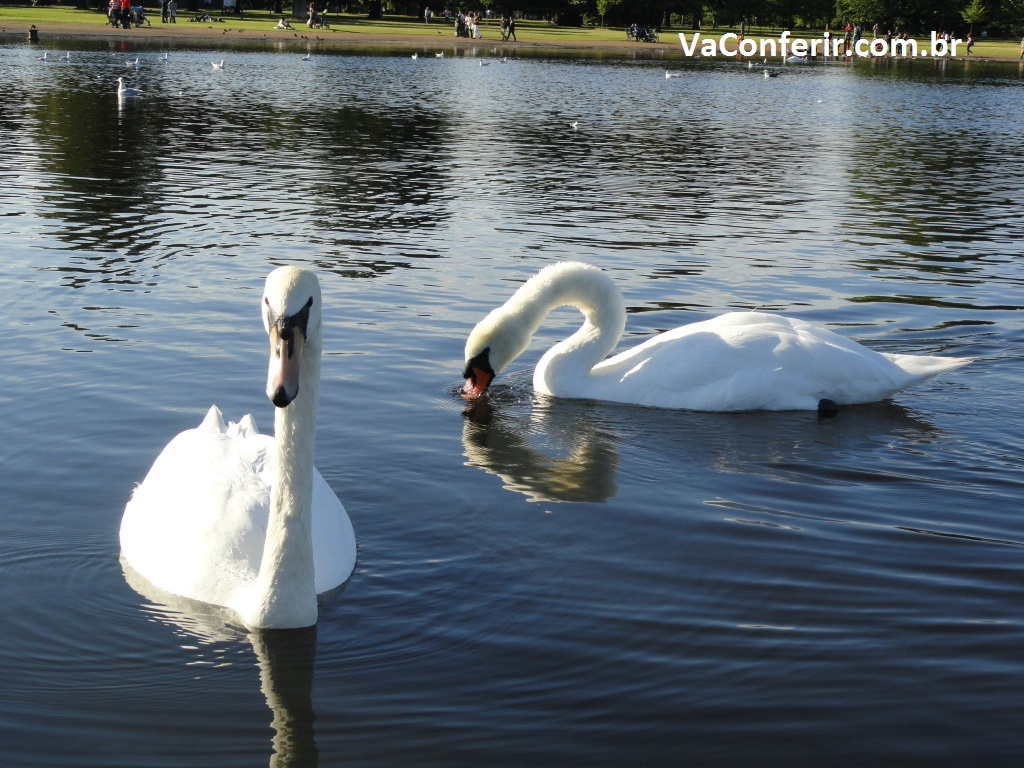 No lago Serpentina a convivência é harmoniosa entre seus habitantes.